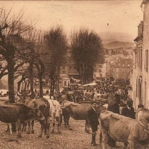 1326275039-carte-postale-marche-oloron-boeufs
